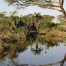 Serengeti watering hole by Paul Plunkett