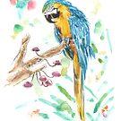 Ara, Papagei, Vogel von MushroomOTD