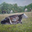 Sleeping cow on grass on sunny day by martyee