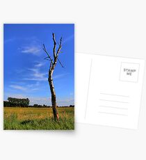 Future ? Postcards
