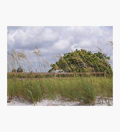 Honeymoon Island Photographic Print