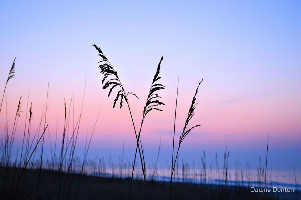 Sea Oats Sunrise by Dawne Dunton