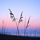 Sea Oats Sunrise by Dawne Dunton