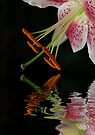 Lily with Reflection by Sally Green