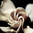 Blume - Gardenie von Evita