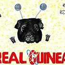 Real Guineas by Rachel Smith