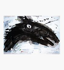 Black Horse 1 Photographic Print