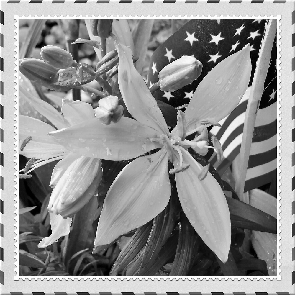 Patriotic Collection B/W WITH Stamp Border by EricaRobbin