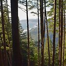 Humbug Mountain, Curry County, Oregon by Mike Kunes