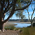 Willow Tree alongside the Orewa River......!! by Roy  Massicks