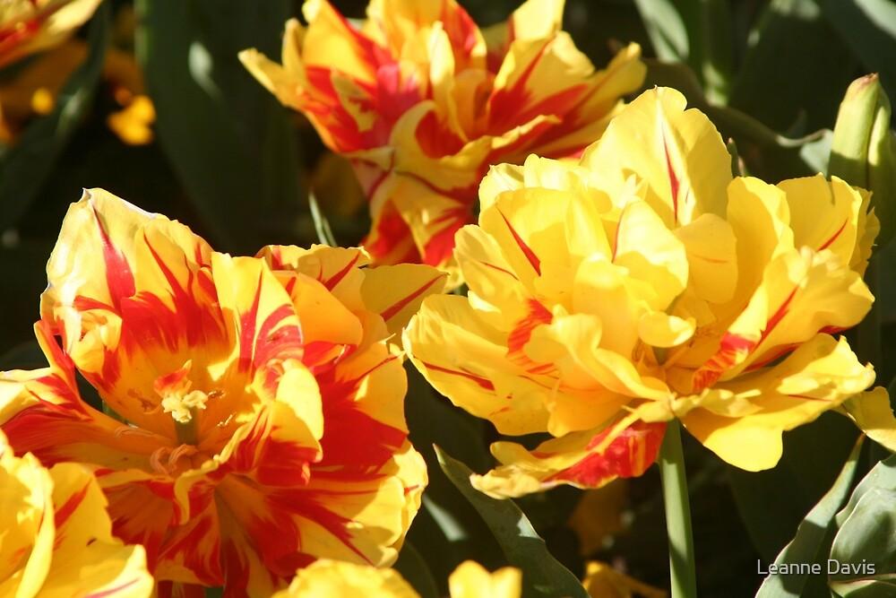 Tulips 3 by Leanne Davis