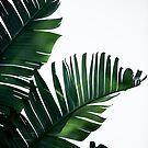Palm Leaves 16 by Mareike Böhmer