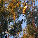 A Flash of Gold in The Trees by 4spotmore
