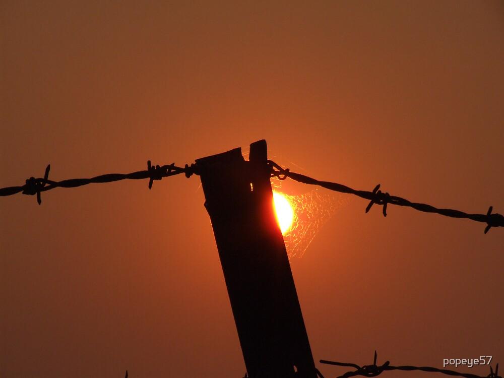 """""""Bushfire Light Wire """". by popeye57"""