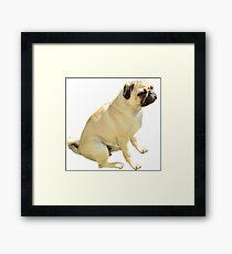 Grumpy Pug Framed Print