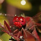 Happy little dragonfly covered in water droplets no.3 by Rick Fin