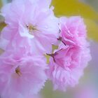 Blossom Sunday by Laurie Minor