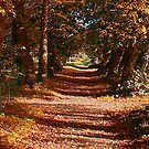 Autum Colours by Trevor Kersley