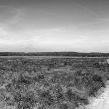 Ginkelse Heide The Netherlands by stuwdamdorp