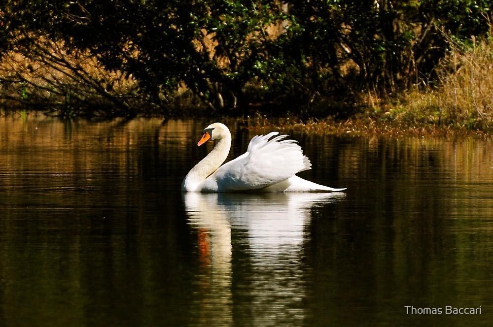 Morning Light Swim by TJ Baccari Photography