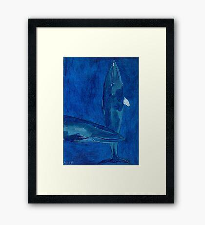 Minke Framed Print