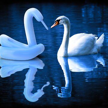When Swans Meet by BigRedCurlyGuy