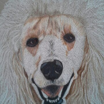 White Standard Poodle by putmanart