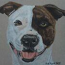 American Pit Bull Terrier II by Anita Putman