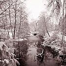 Vancouver - lost lagoon (winter) by jackson photografix
