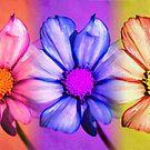 Floral Trio by cshphotos