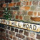 Shrub Hill Road - complete with shrub by Mike Oxley