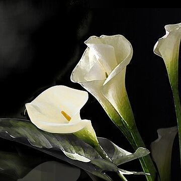 Behold the Beautiful Calla by JMarielle