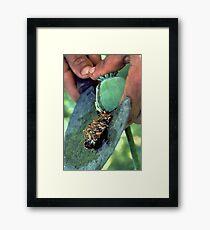 Raw opium Framed Print