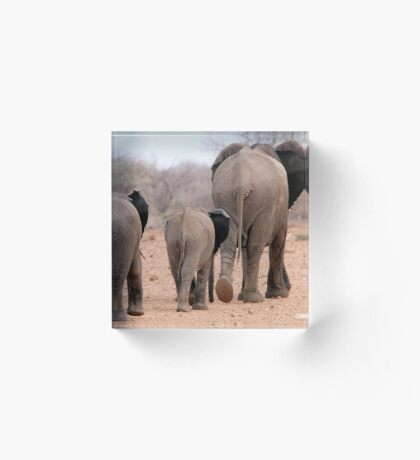 THE 2016 DROUGHT AND THE AFRICAN ELEPHANT - DESPERATELY SEEKING FOOD Acrylic Block