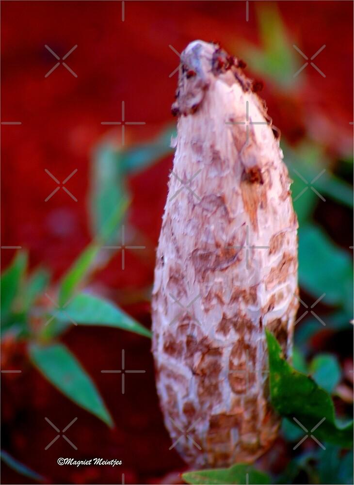 False Shaggy Ink Cap (Podaxis)- Agaricaceae by Magriet Meintjes