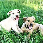 Max and Betty Lou by Chanel70
