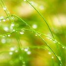 Summer Raindrops by Susie Peek