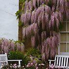 Garden Wisteria by lezvee