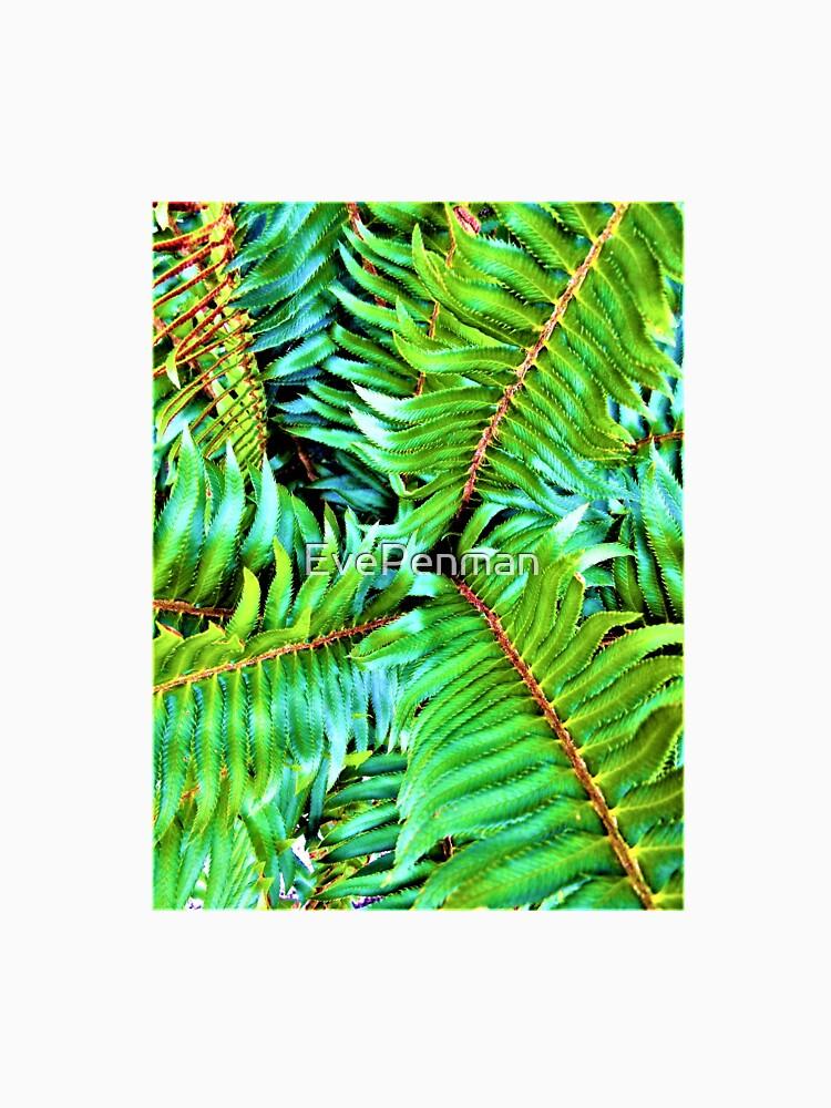 Forest Fern by EvePenman