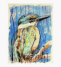 Sacred Kingfisher Photographic Print