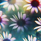 Echinacea photographed through prism filter by Karin Elizabeth