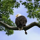 Eagle Leg Extension by Kelly Chiara