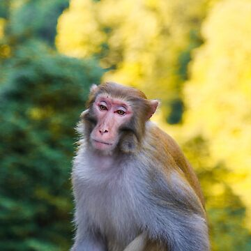 Monkey in Hunan, China by Fike2308