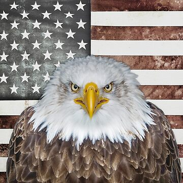 American Bald Eagle Patriot by morningdance