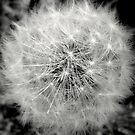 Wishes in Black and White..... by DoreenPhillips
