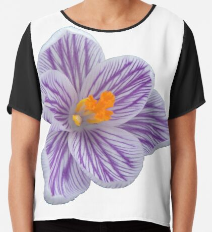 fabelhafte Krokusblüte, Krokus in der Farbe lila, violett Chiffontop
