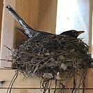 Our First House Guest by Mary Kaderabek-Aleckson