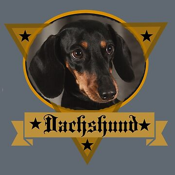 Dachshund by Atkisson