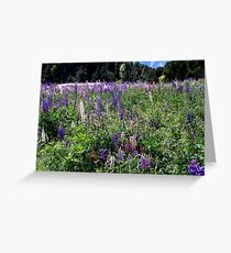 Colourful field Greeting Card