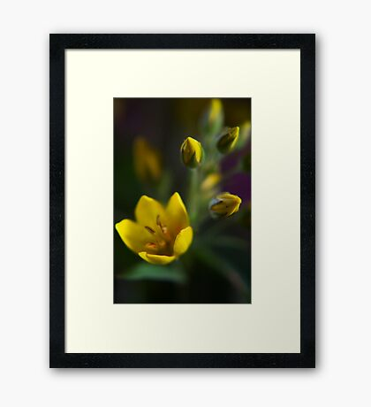 Yellow parade (from wild flowers collection) Framed Print